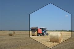 Пшеница сорт «губернатор Дона»