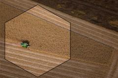 Пшеница сорт «сорриал»